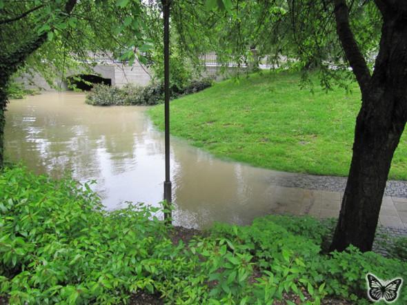 Hochwasser Donau Ingolstadt Juni 2013 - 1