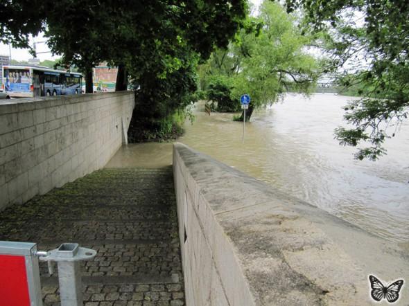 Hochwasser Donau Ingolstadt Juni 2013 - 3
