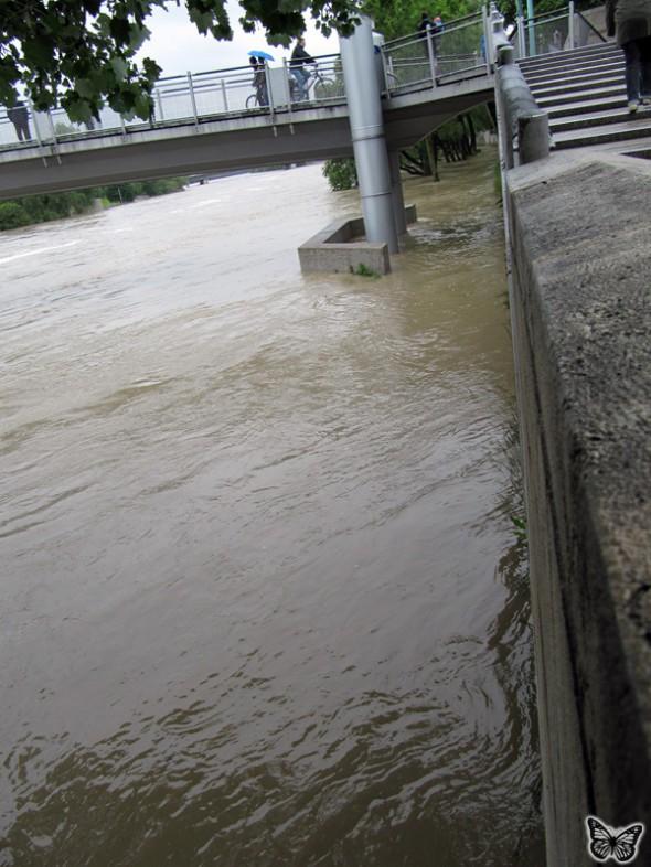 Hochwasser Donau Ingolstadt Juni 2013 - 4