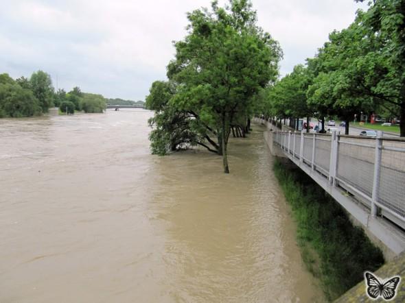 Hochwasser Donau Ingolstadt Juni 2013 - 5